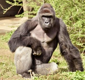 The mishap at Cincinnati Zoo